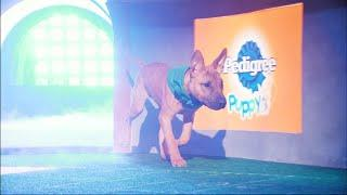 Puppy Profile: Savannah the Bull Terrier | Puppy Bowl XIV
