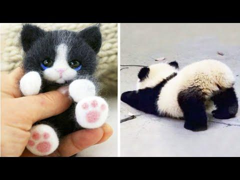 Cute baby animals Videos Compilation cute moment of the animals - Cutest Animals #29