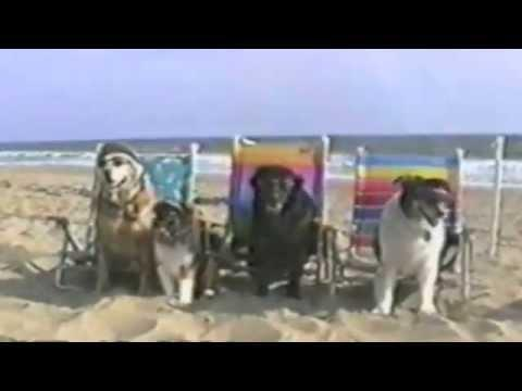 Funny Dogs At The Beach - Compilation