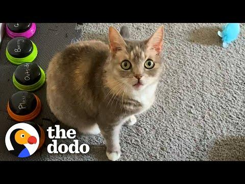 This Cat's Favorite Word Is Exactly What You'd Expect #Video