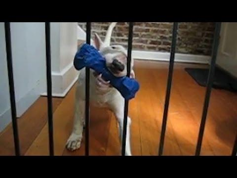 Dog Thinks Through A Problem - Compilation
