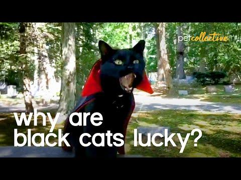 Are Black Cats Lucky? Video.