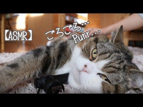 Maru's purr sounds