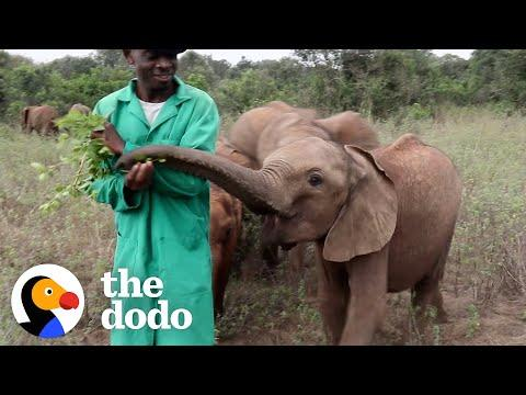 Guys Stick By Baby Elephants 24/7 For Years #Video