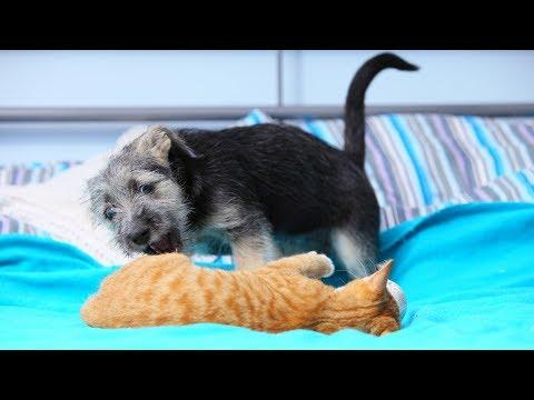 Funny Cats Annoying Dogs Compilation (2019)