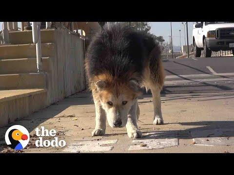 Senior Dog Turns Into Puppy Again Once Rescued #Video