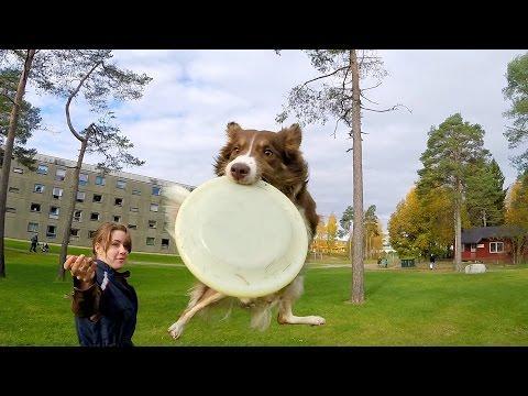 GoPro: Border Collie Tricks In Norway
