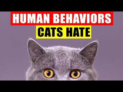 18 Human Behaviors Cats Hate and Wish You Wouldn't Do #Video