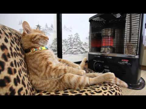 Coolest Cat Ever Warms By Heater Just Like A Human