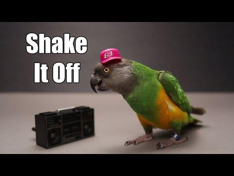 Shake It Off Parroty - Kili Swift Dancing Parrot