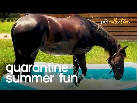 Pets Quarantine Summer Fun Video