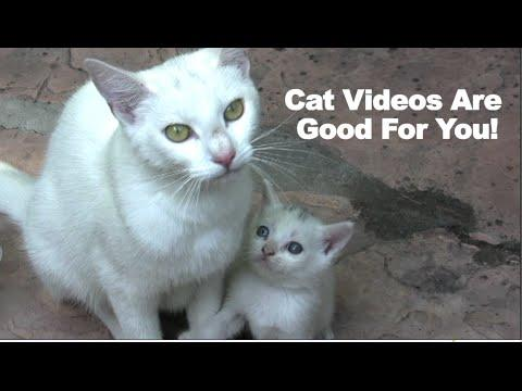 Cat Videos Are Good For You