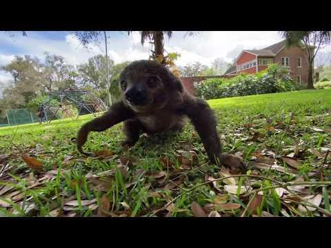 Sloth on the run