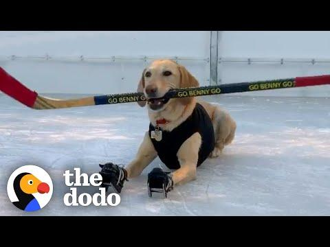 Dog Who's Obsessed With Ice Skating Gets A Special Surprise After Quarantine #Video