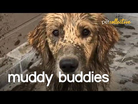 The World's Muddiest Pets Video