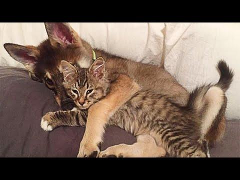 Puppy Chooses Him Own Shelter Kitten To Bring Home #Video