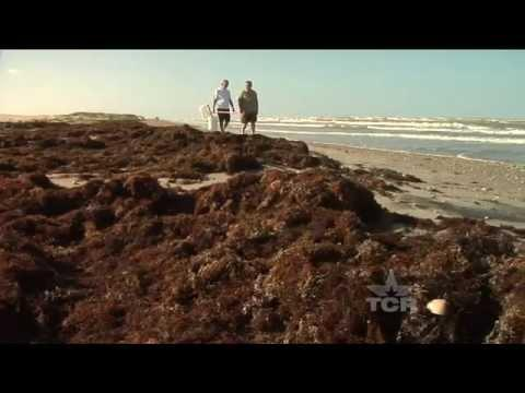 Seaweed Man (Texas Country Reporter)