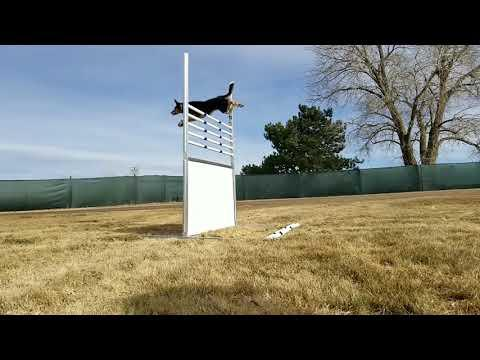 Jazzy easy 60 inches jump