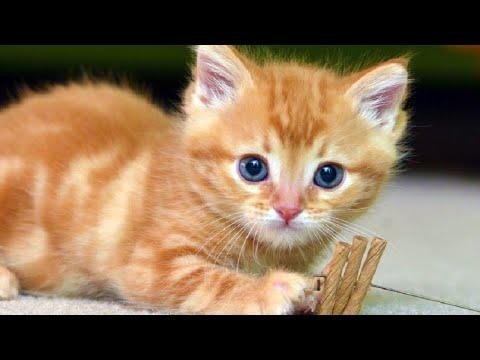 Cats Meowing Video - Cute Kittens Meowing