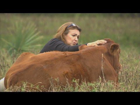 Rowdy Girl  Sanctuary (Texas Country Reporter)