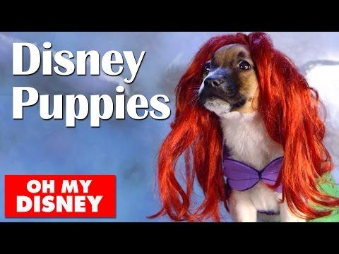 Adorable Disney Puppies In Slow Motion | Oh My Disney