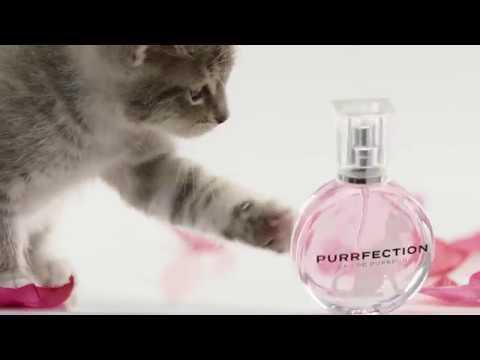 PURRFECTION - The new Eau de Purrfum