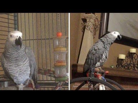 Annoyed Parrot Tells Dog Off For Barking Too Much Video