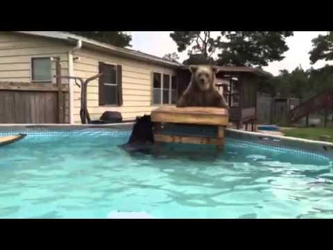 Honey Bear Gets Some Pool Time!