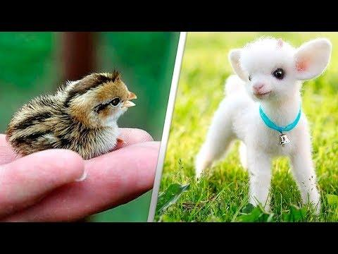 12 CUTEST BABY ANIMALS
