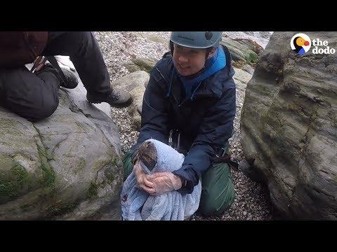 Baby Seal Trapped In Net Saved By The Sweetest Rescuers | The Dodo
