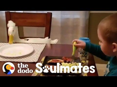 This Little Boy and His Duck are Inseparable | The Dodo Soulmates