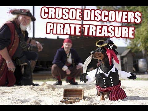 Crusoe Dreams of Pirates - Cute Dog Video Pirate Costume!