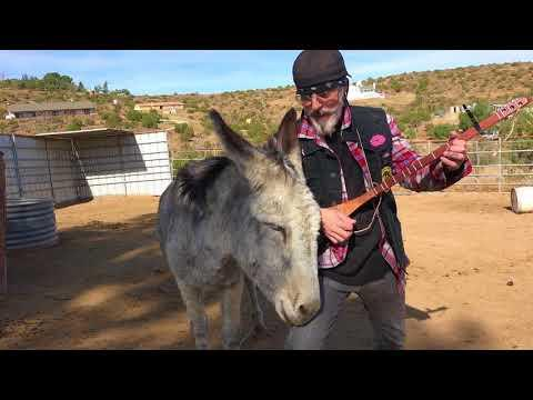 Donkey Loves Beatles Music Video