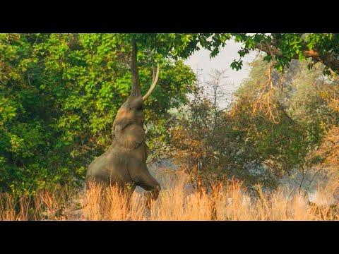 Spend A Day On The Plains Of Zimbabwe Video | Relax, Mediation, Sleep | BBC Earth