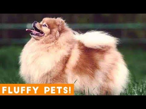 Cutest Fluffy Pets Ever 2019 | Funny Pet Videos