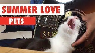 Summer Love Pets