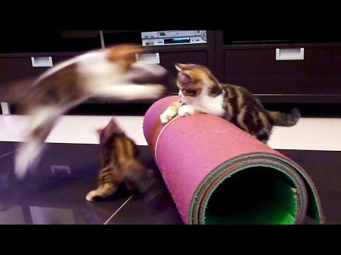 Kittens Performs Circus | Funny Cats