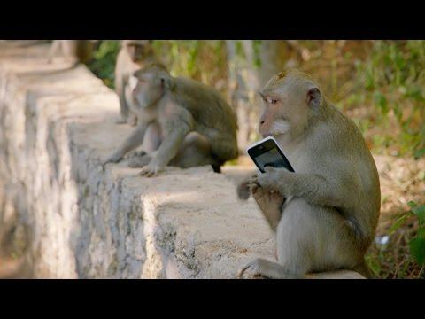 Why Are These Monkeys Stealing From Tourists