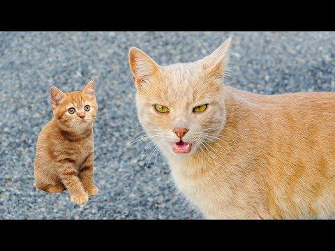 Mom Cat Talking to Kittens - Cute Cat Videos (2018)