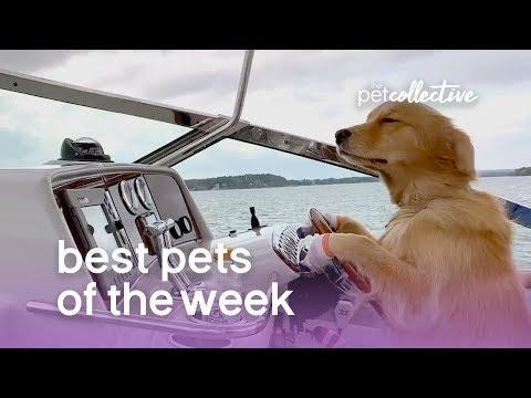 Best Pets of the Week - I'M THE DOG CAPTAIN NOW