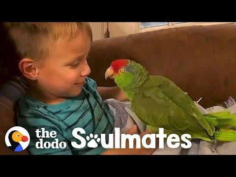 Parrot Follows Her Favorite Kid Everywhere Video