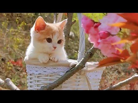 That Beautiful Basket Kitty Video