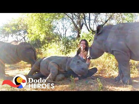 Watch This Baby Rhino Fall In love With Her Rescuer's Cat | The Dodo Heroes