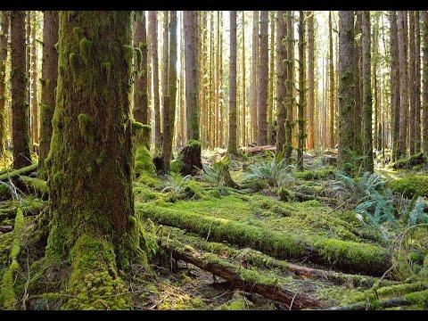 Peaceful, Quiet Walk Through The Rainforest