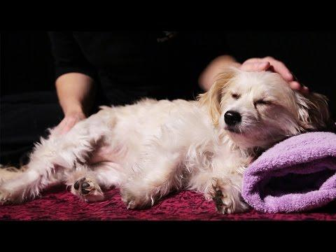 Dogs Get Massages For The First Time