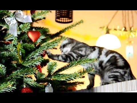 Christmas Cats Compilation