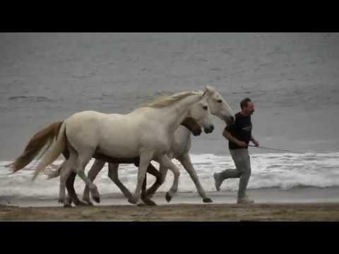 Horse Trainer, David Lichman, Having Fun With Horses At The Beach