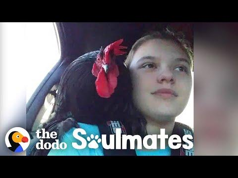 A Day in the Life of a Rooster and His Best Friend Video | The Dodo Soulmates