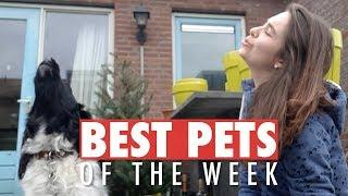 Best Pets of the Week | August 2018 Week 2