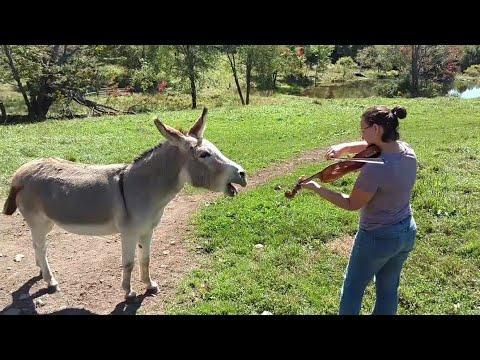 Funny Donkeys Doing Funny Donkey Stuff Compilation